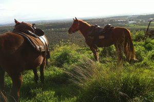 רכיבה זוגית על סוסים בצפון