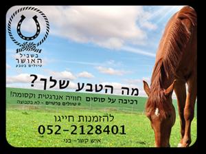 אודותינו - בשביל האושר טיולי סוסים וריינג'רים