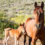 טיולי סוסים בטבע בצפון